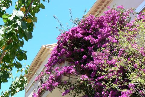 bougainvillee-balcon-villa-annees-50