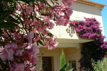 lauriers-roses-et-bougainvillees
