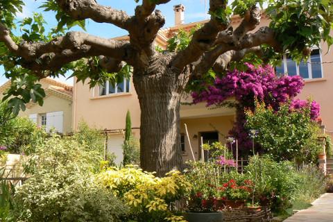 le jardin méditerranéen devant la maison